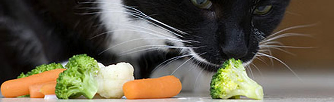 los amigos  Receitas Caseiras de Comida de Gato