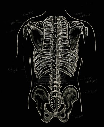 Struktur Vestigial Manusia Paling Kontroversial