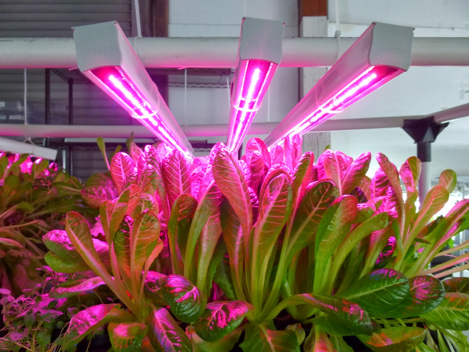 lighting product galaxyhydro review plant my led top best usa light grow home lights