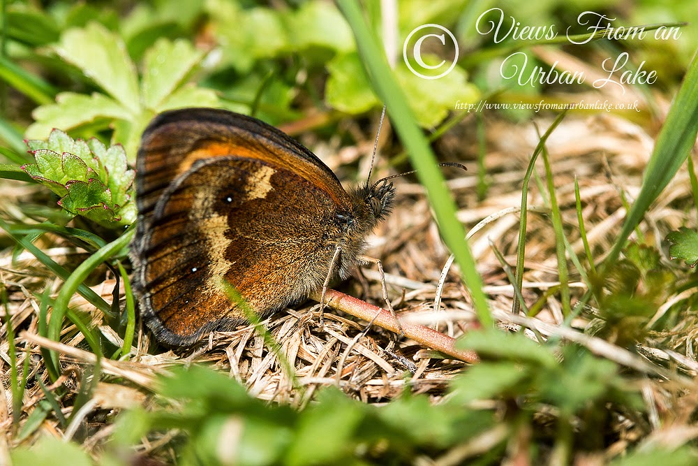 Gatekeeper - Lodge Lake, Milton Keynes