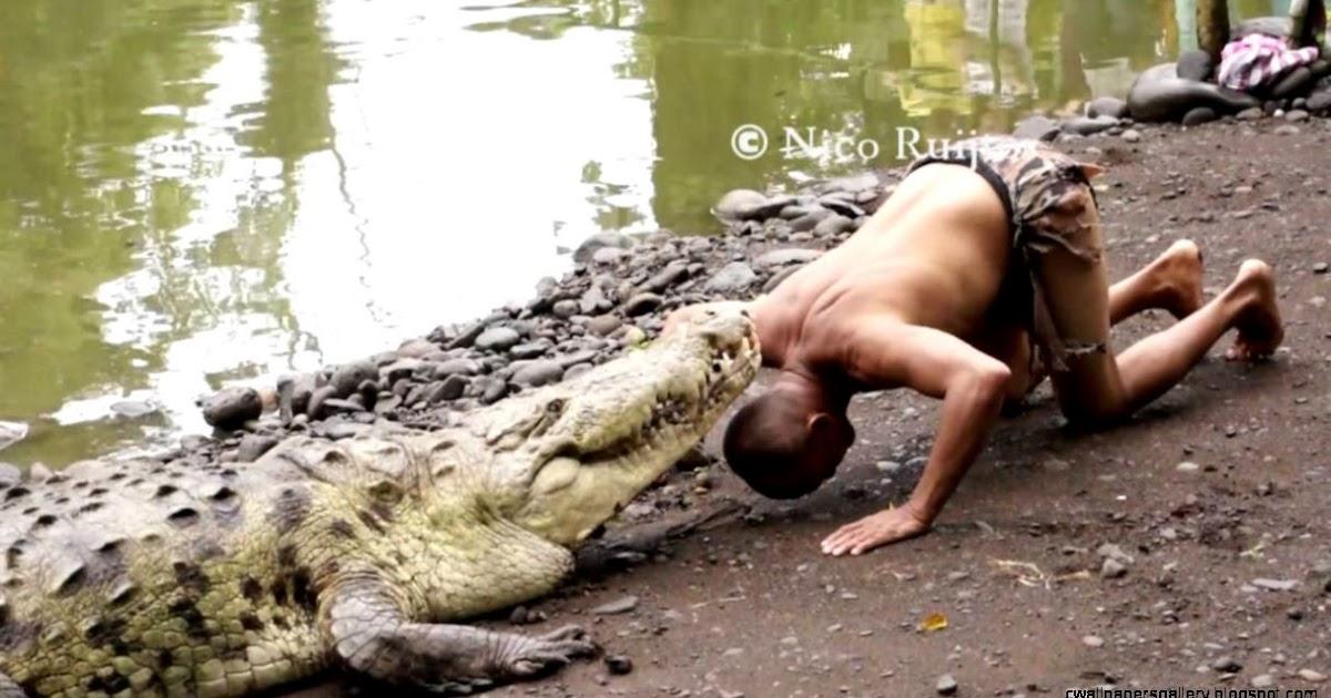 Crocodile Vs Alligator Fight | Wallpapers Gallery