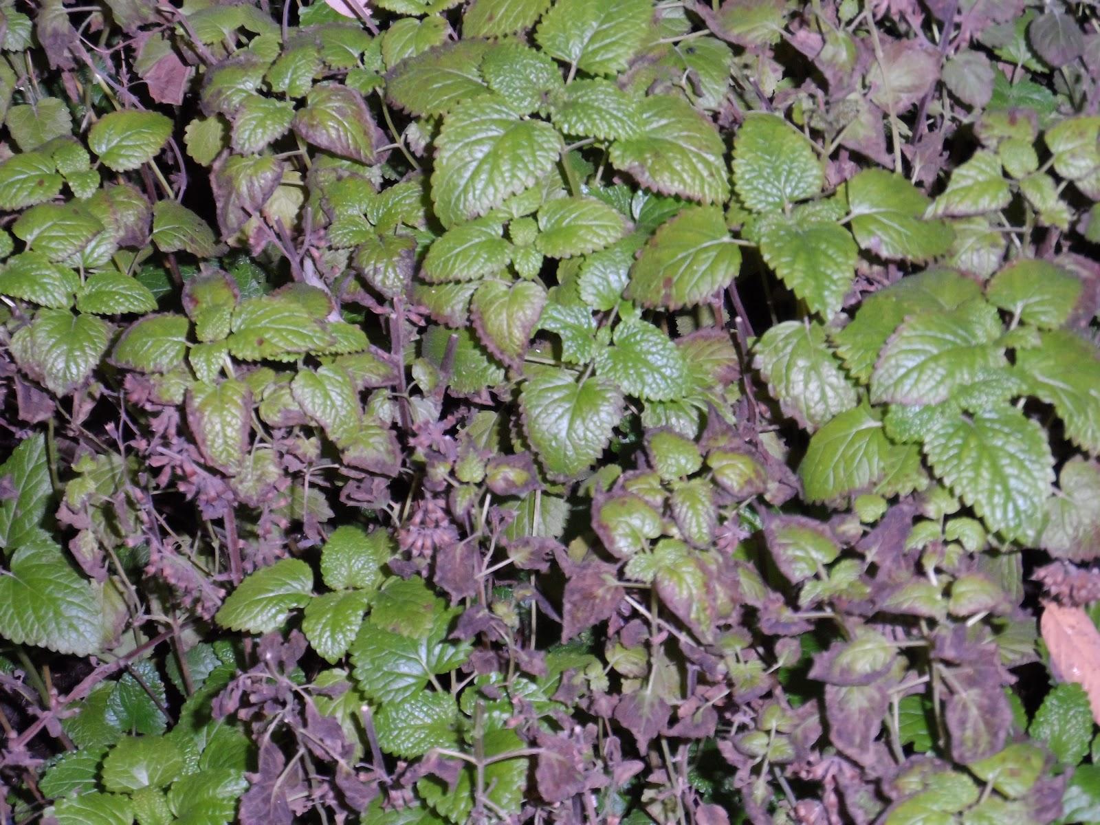 Jardines ciencia y arte plantas medicinales del jard n for Jardin botanico medicinal