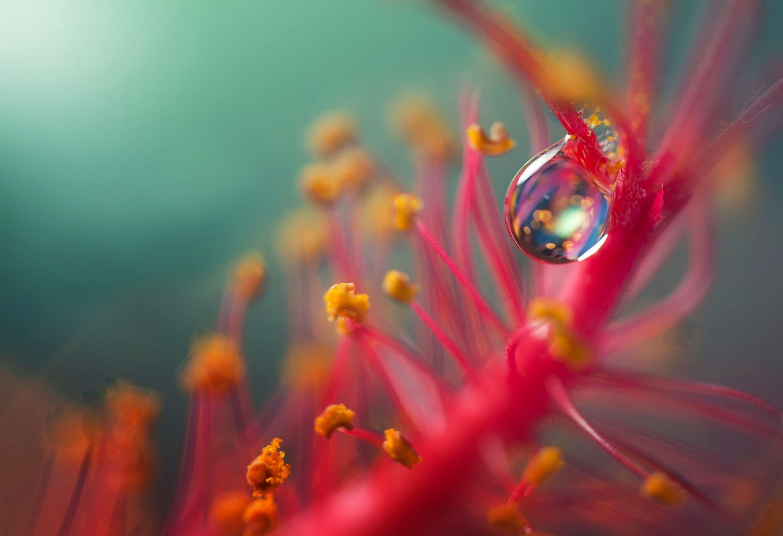 Water drop on flower Mobile