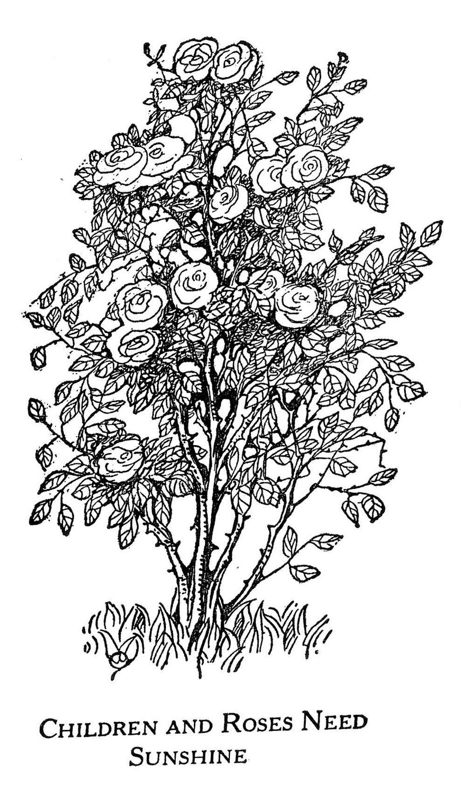 Line Drawing Of Rose Plant : Digital two for tuesday july