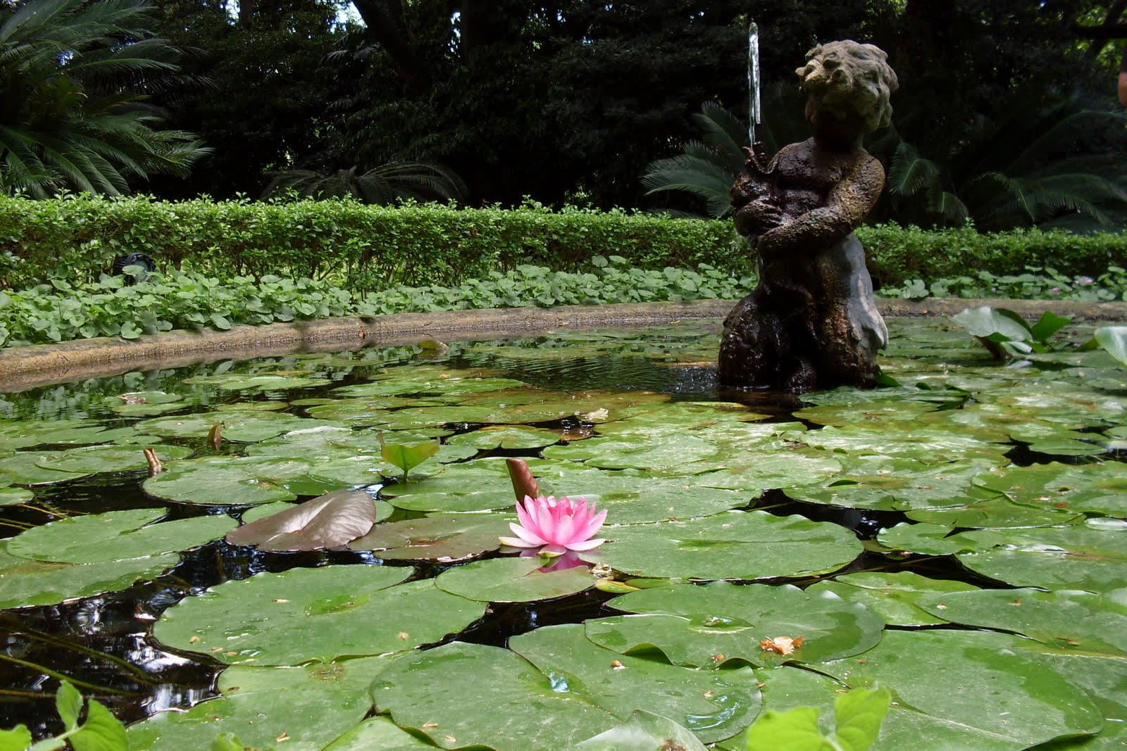 Jardin del mundo bot nico la concepcion viveros guzman for Viveros de plantas en concepcion