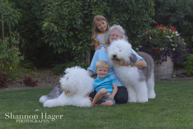 Shannon Hager Photography, Old English Sheepdog, Snowdowne