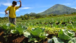 peluang usaha agrobisnis, hambatan agrobisnis