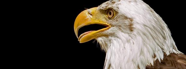 guzel kus facebook kapak resimleri+%252834%2529 35 En Güzel Facebook Kuş Kapak Resimleri indir