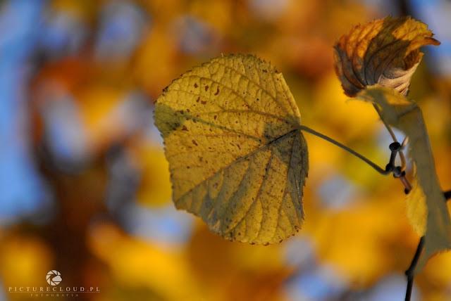 picturecloud.pl - blog fotograficzny