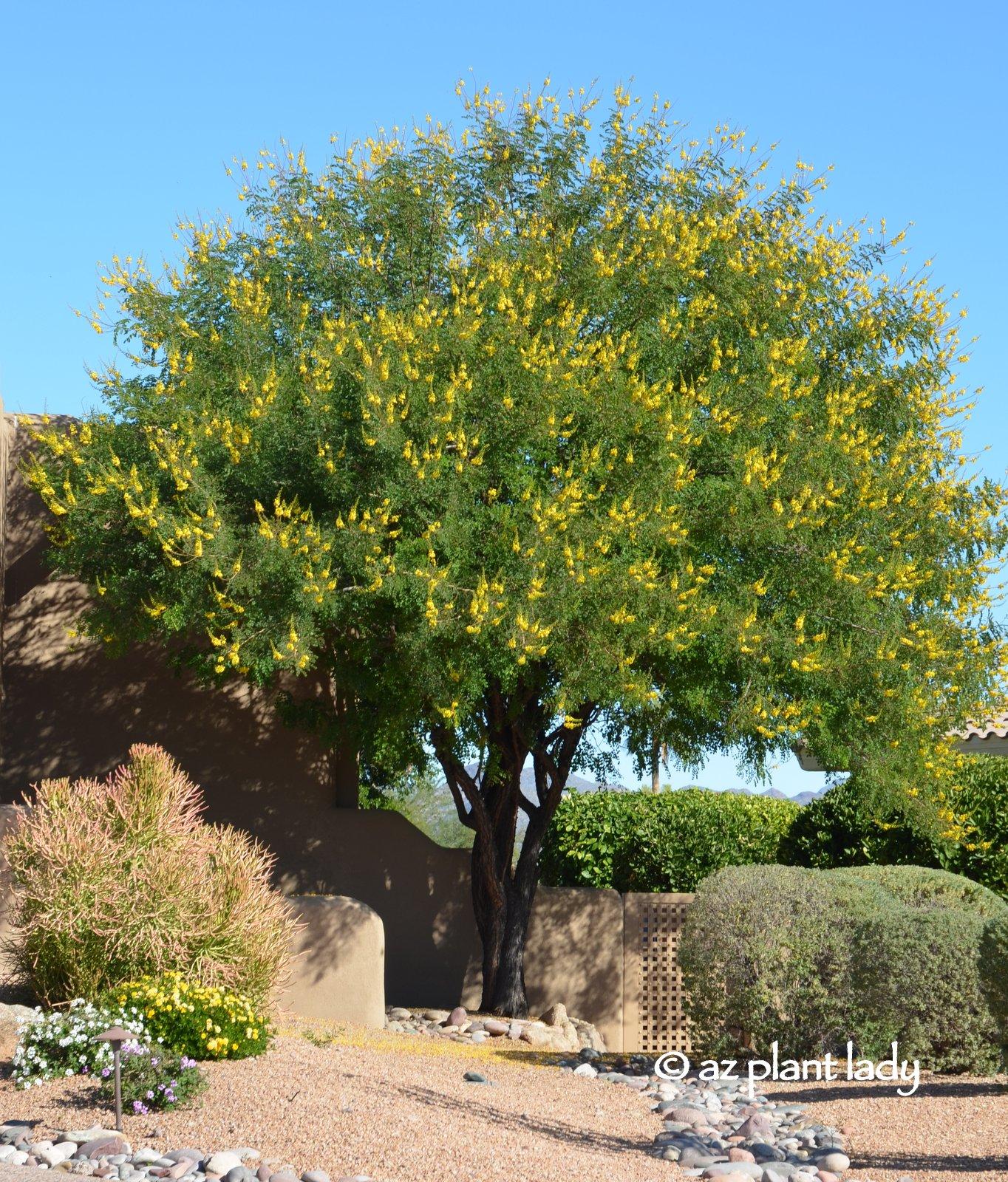 November Blooms Ramblings From A Desert Garden
