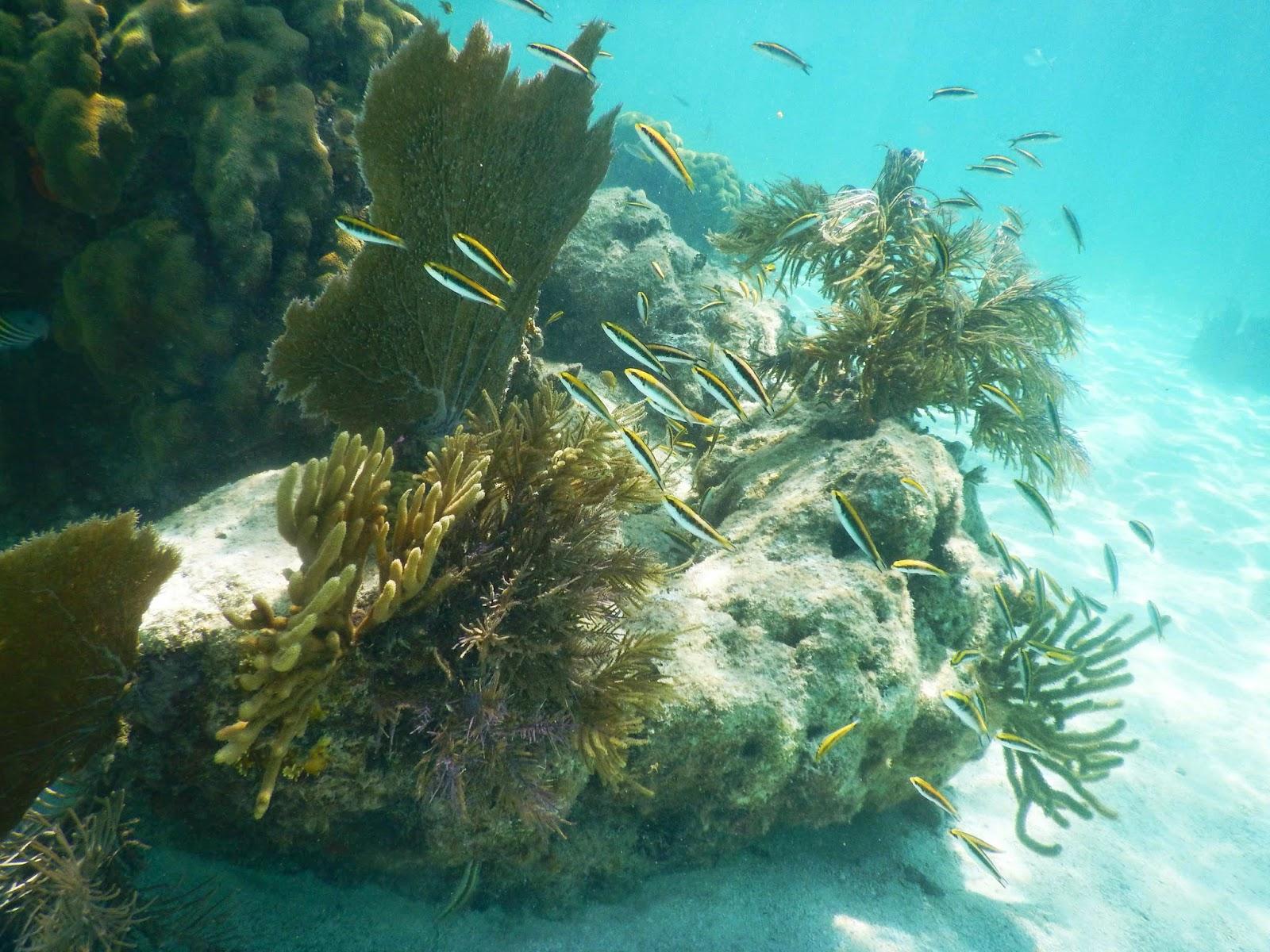 Key Largo Snorkeling