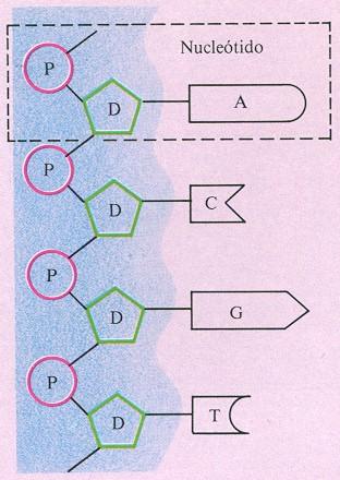 Esquema de cuatro eslabones