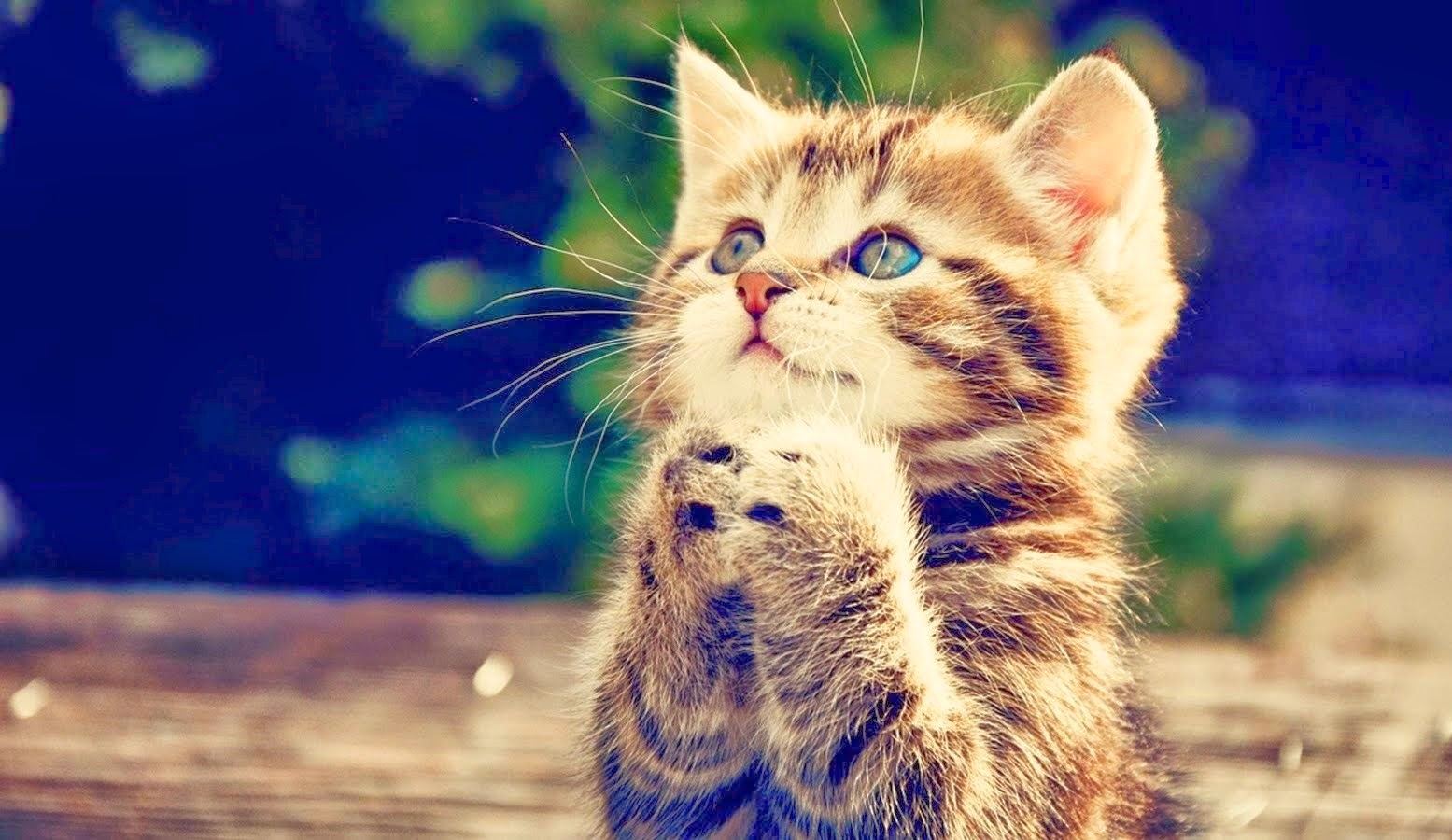 Mengapa Kucing Menoleh Waktu Kita Panggil Puss?