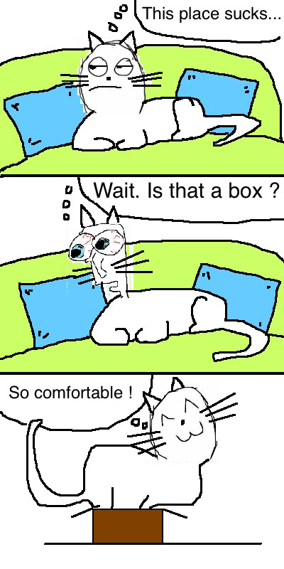 Funny Cat Logic Box