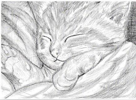 Ginger kitten asleep under covers pic