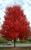 Autumn Blaze2