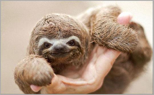 Cute Baby Sloth, Sloth, Baby Animals