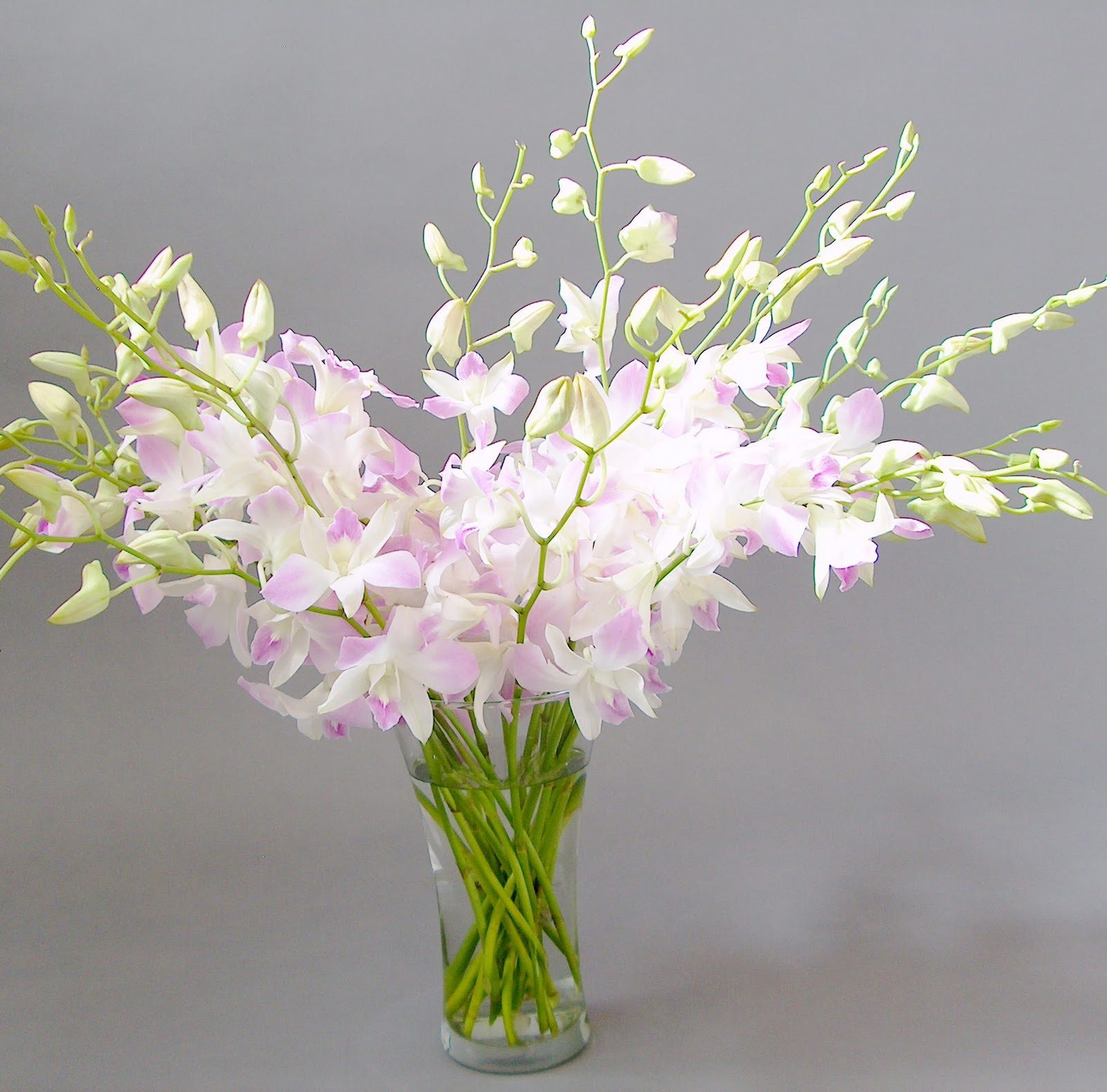 line Orchid Flower Delivery