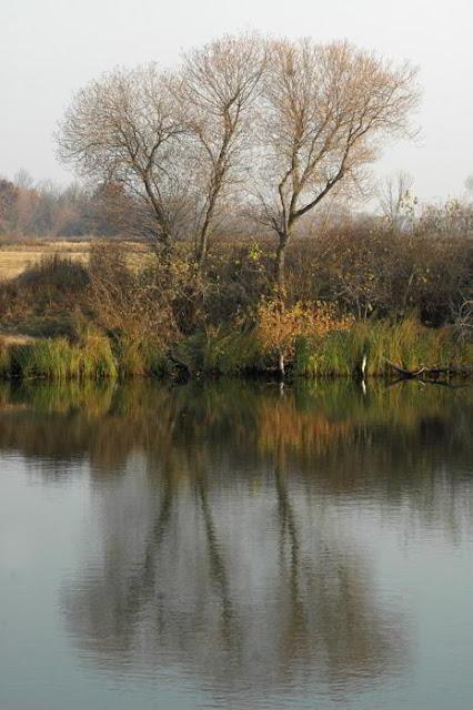 Фото Укринформ: осенние деревья