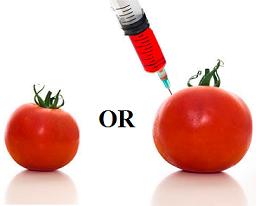 GMO in Organic Foods