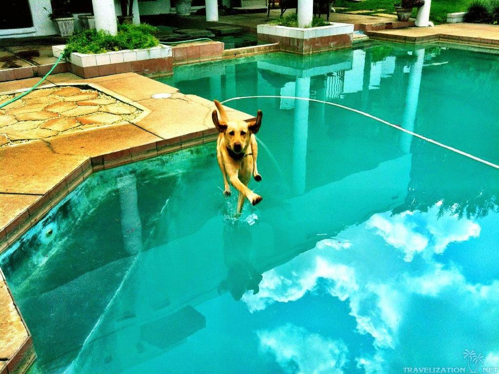 perro corriendo sobre el agua