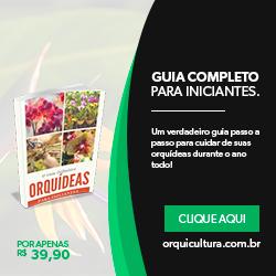 Você sabe o que sua Orquídea precisa?