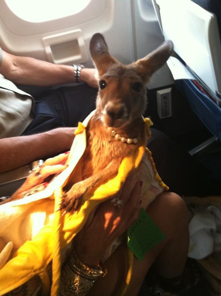 funny animals, baby kangaroo