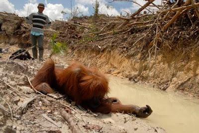 vad är palmolja