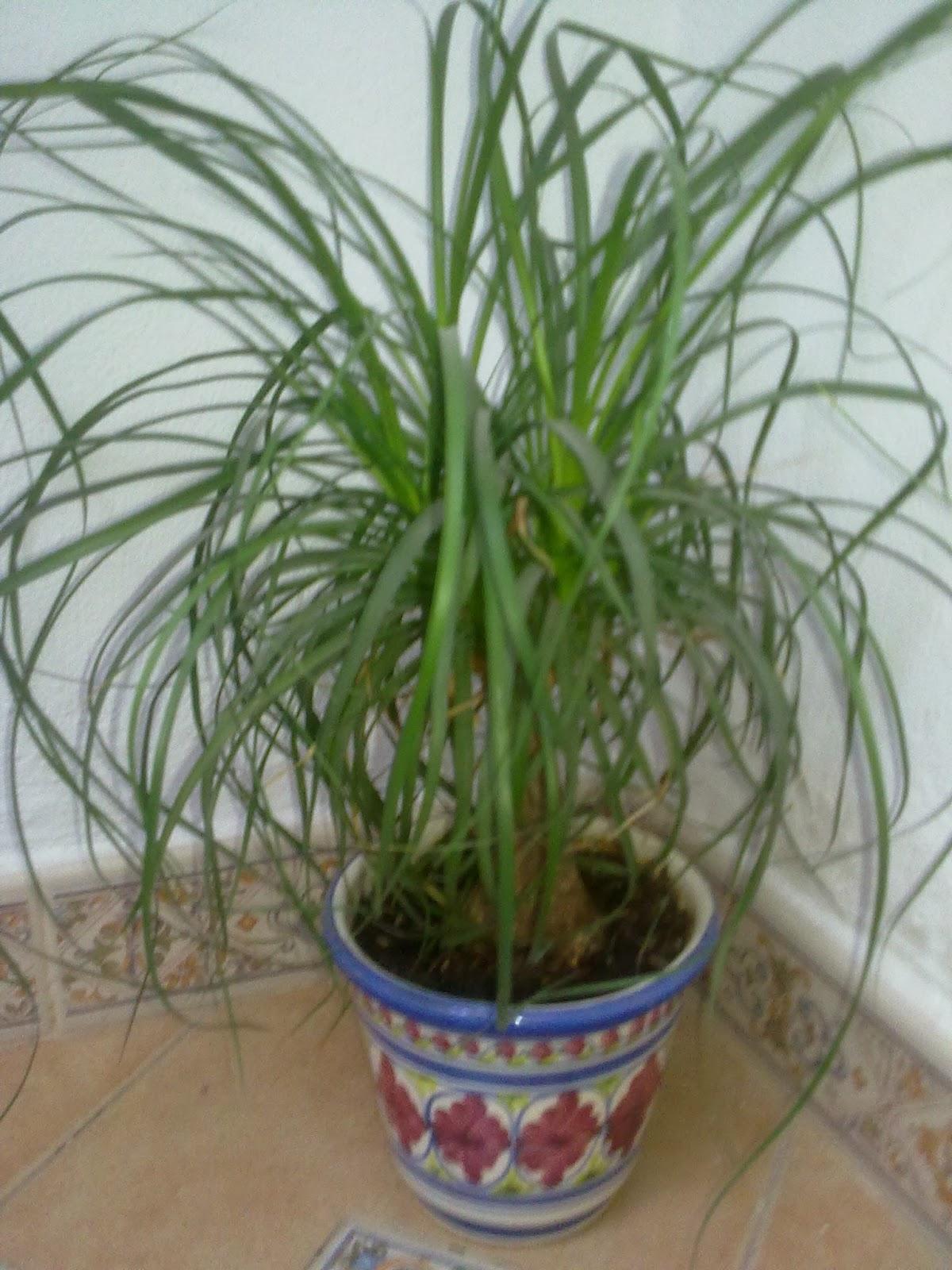 Que plantas poner en el interior de mi casa - Variedades de plantas de interior ...