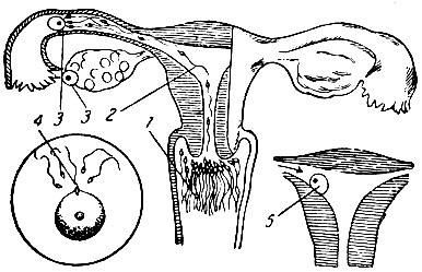 kak-vstavlyat-vaginalnie-svechi-pimafutsin