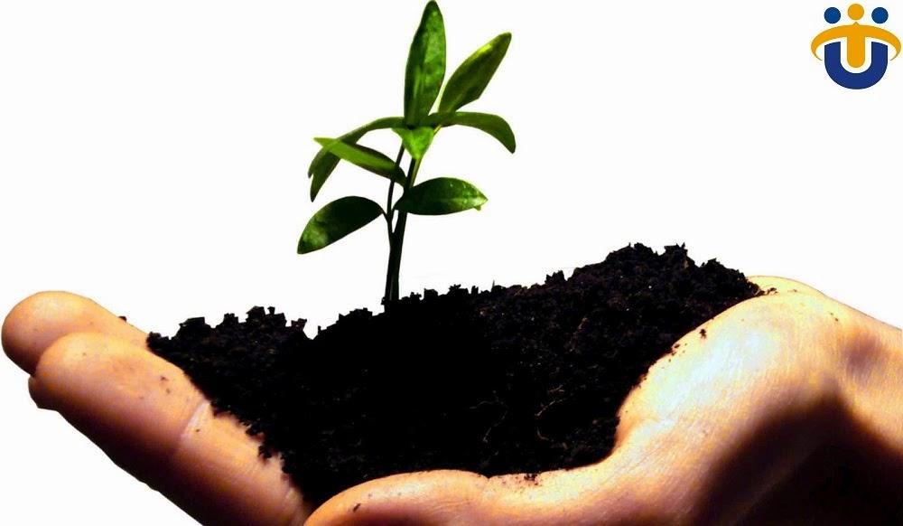 Grow your Organization with US Technosoft