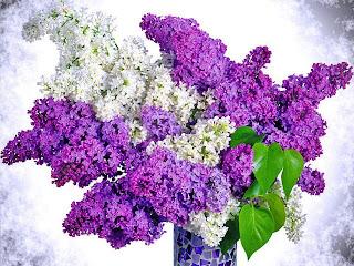 blanco y lila en flores preciosas