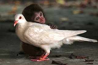 http://email-junk.com/pictures/weird_friendships/monkey_bird.jpg