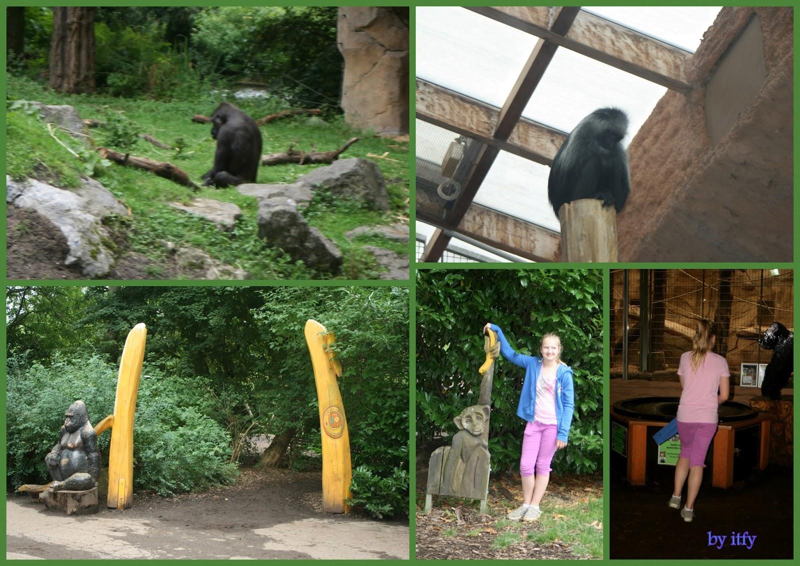 i test for you ausflugtipps zoo duisburg gore tex big days. Black Bedroom Furniture Sets. Home Design Ideas