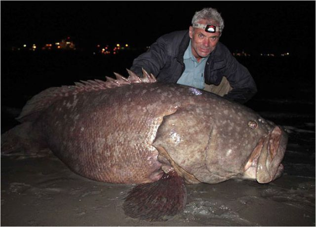 Waiting Bd Top 5 Scariest Fish On River Monsters 17
