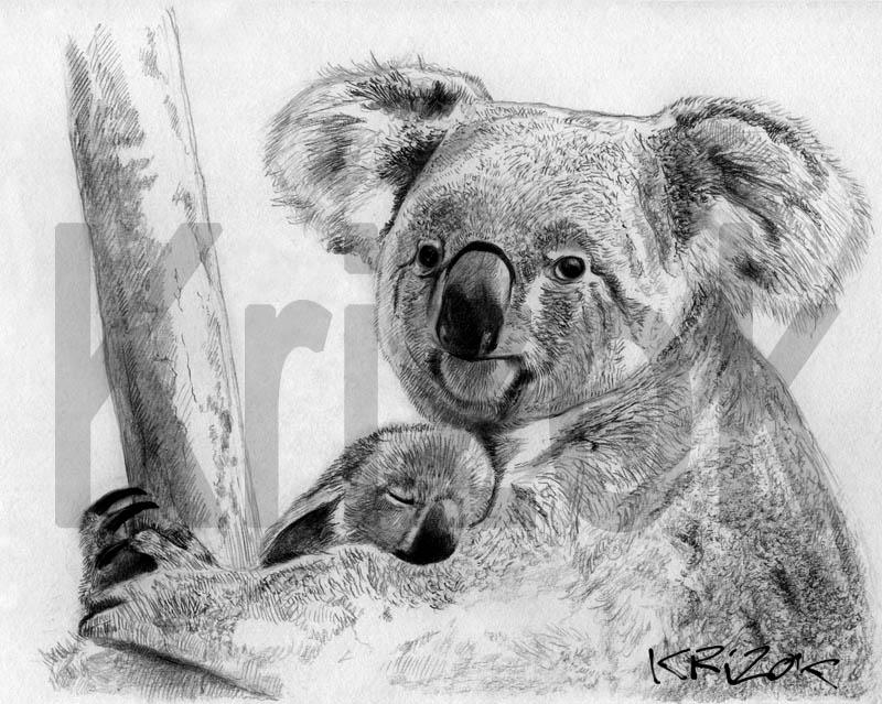 Krizok juillet 2015 - Dessins d animaux sauvages ...