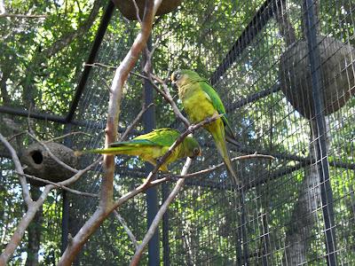 imagen loros verdes+aves
