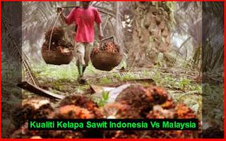 Kualiti Kelapa Sawit Indonesia Vs Malaysia