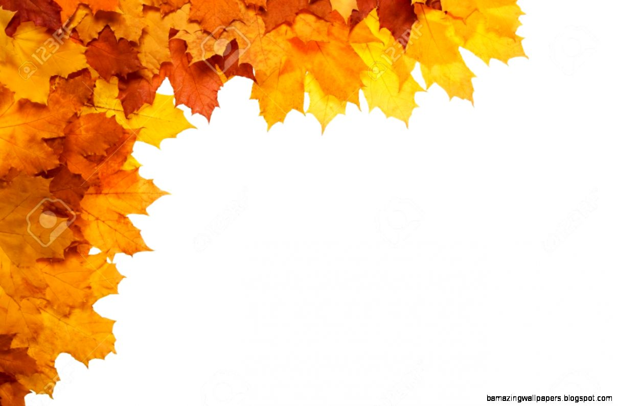 Framework From Autumn Leaves On A White Background Stock Photo
