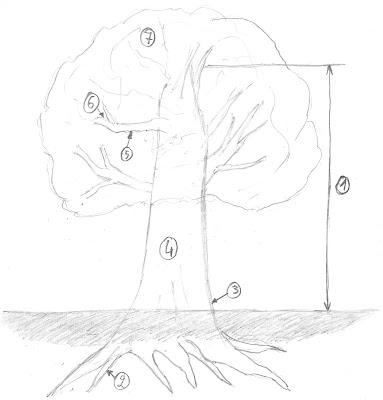 Tekening met de aanduiding van de boomonderdelen