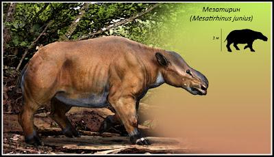 perissodactilos prehistoricos Mesatirhinus