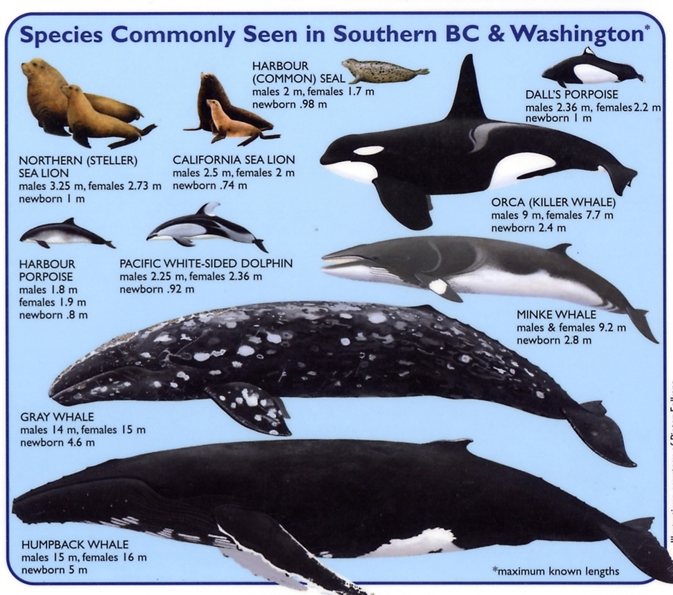 Whale Species Chart