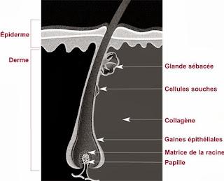 Quest-ce que cest keratinovoe le traitement des cheveu de la photo