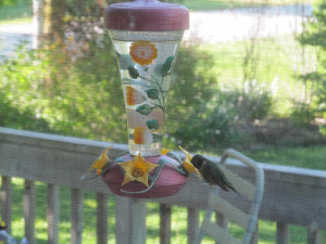 A hummingbird visits the feeder