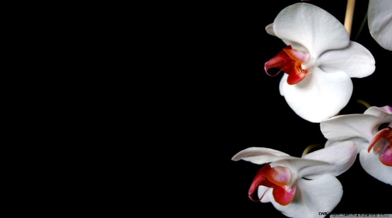 White Orchids Black HD desktop wallpaper  Widescreen  High