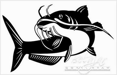Cara Benar Budidaya Ikan Lele Untuk Bisnis Cepat Kaya