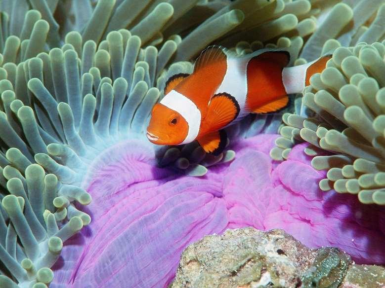 Denizlerdeki Muhteşem Canlıların HD Resimleri