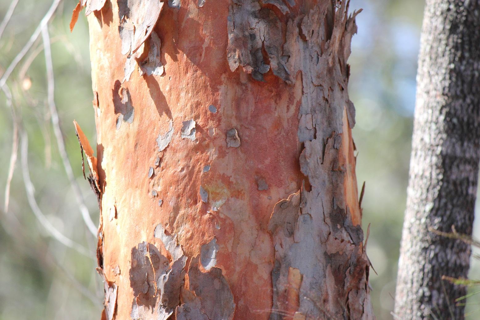 brisbane backyard naturalist haig st reserve ipswich