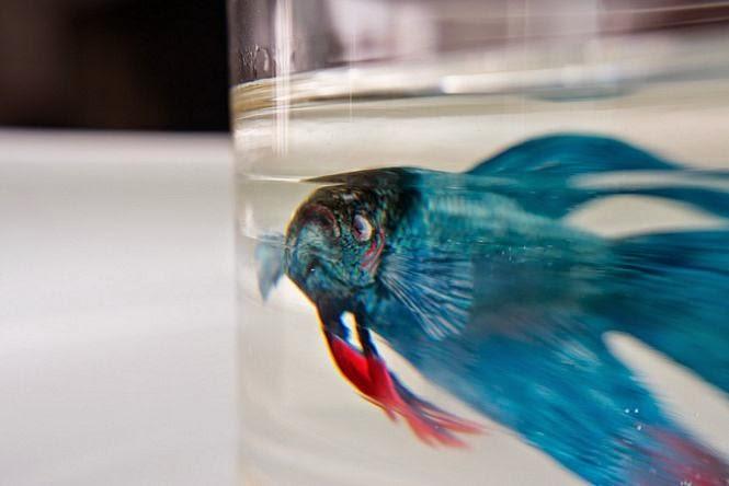 Pintura 3D: Peixe azul