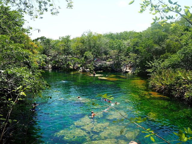 Clear blue jungle lagoon - Cenote Jardin del Eden, near Tulum, Mexico